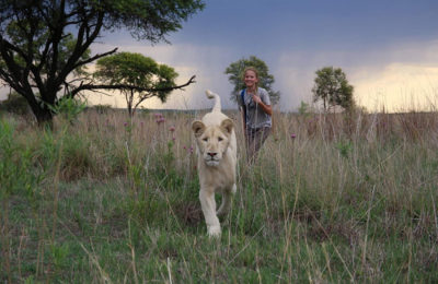 Mia and The White Lion, cerita mengenai nasib singa di Afrika